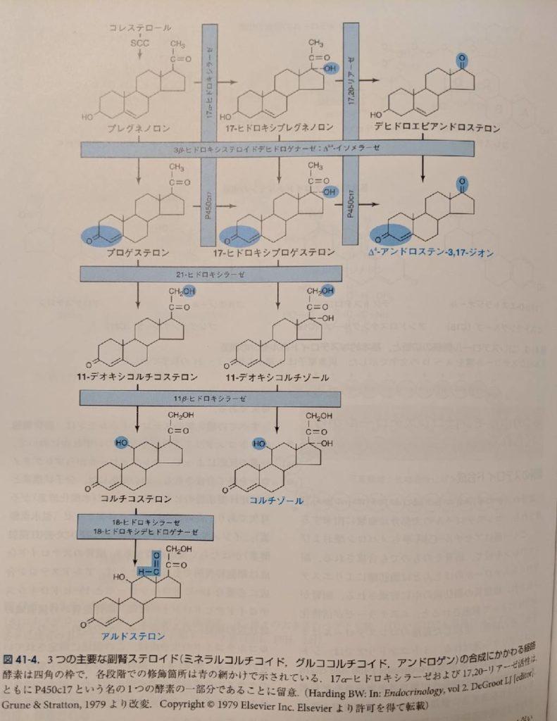 ステロイドホルモン合成